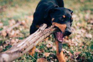 木に噛みつく犬の写真