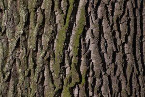 クヌギの木の写真