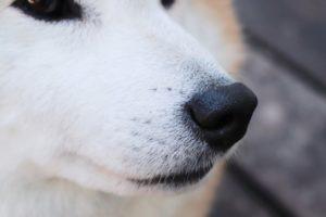 犬の鼻の写真