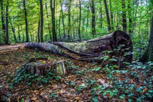 朽ち木の写真