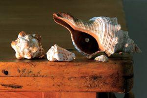 巻貝の写真