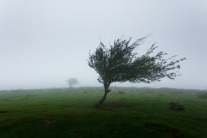 風が吹いている写真